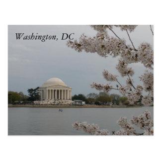 Kirschblüten: Washington, D.C. Postcard Postkarte