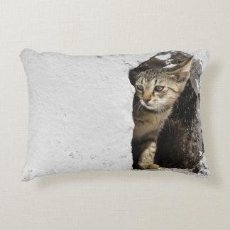 Kissen - niedliches griechisches Kätzchen auf