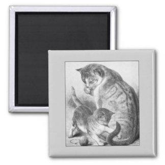 Kitty espiègle magnet carré