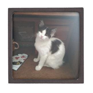 Kitty Fun! Schachtel