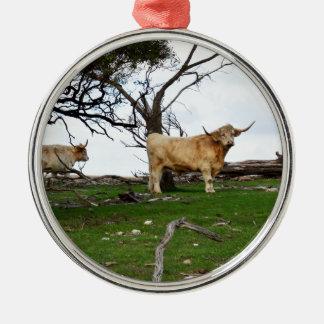 Kitz-Hochland-Kuh, Silbernes Ornament