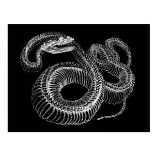 Klapperschlangen-Skelett Postkarte