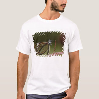 Klar-winged Schmetterling Hyalurga SP-?) Wolke 2 T-Shirt
