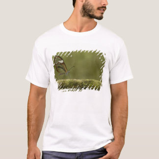 Klar-winged Schmetterling Hyalurga SP-?) Wolke T-Shirt
