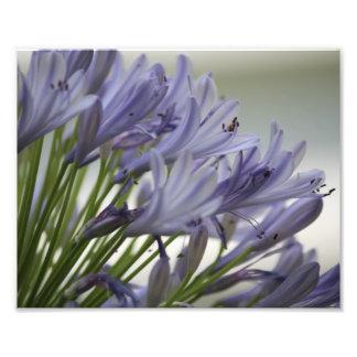 Kleine Blüte Fotodruck