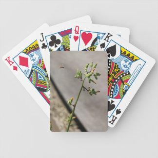 Kleine Wanze, wenig Blume Spielkarten