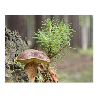 Kleiner wilder Pilz Postkarte