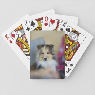 Kleiner Zobel Merle Sheltie Spielkarten