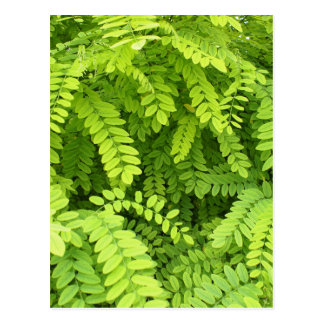 Kleines, blasses, hellgrünes Blätter Postkarte