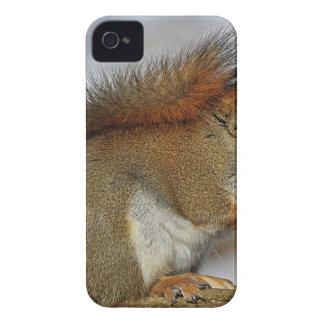 Kleines Eichhörnchen stehend auf Brown-Holz iPhone 4 Hülle