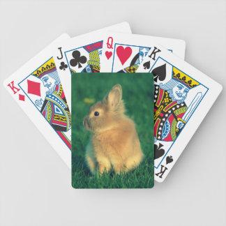 Kleines Kaninchen Spielkarten