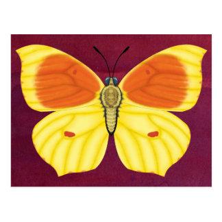 Kleopatra-Schmetterling Postkarte