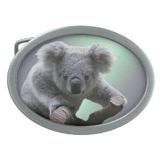 Koala-Bär Ovale Gürtelschnallen