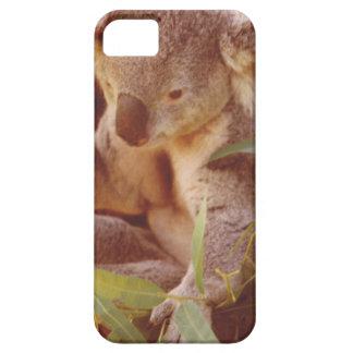 Koala-Bärn-Liebe iPhone 5 Etuis
