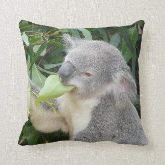 Koala, der Gummi-Blatt isst Kissen