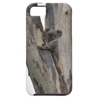 KOALA IM BAUM QUEENSLAND AUSTRALIEN SCHUTZHÜLLE FÜRS iPhone 5