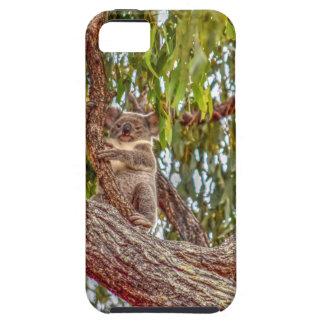 KOALA IN DEN BAUM-AUSTRALIEN-KUNST-EFFEKTEN HÜLLE FÜRS iPhone 5