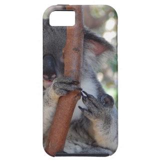 Koala.JPG iPhone 5 Hülle