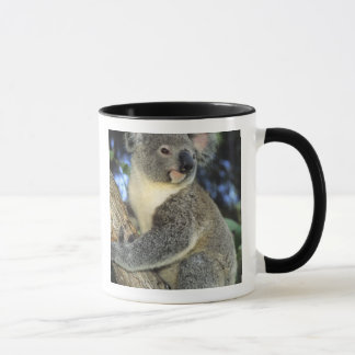 Koala, Phascolarctos cinereus), Australien, Tasse