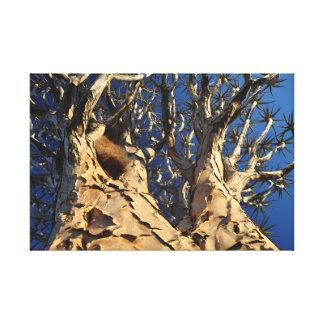 Köcherbaum von unten leinwanddruck