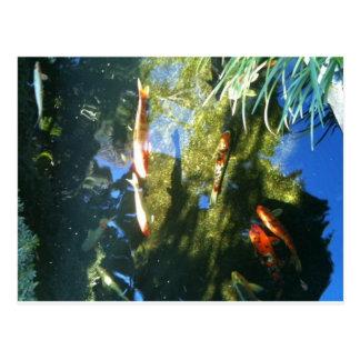 Koi Fische Postkarte