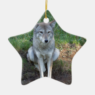 Kojote-Sammlung Keramik Stern-Ornament