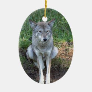 Kojote-Sammlung Ovales Keramik Ornament
