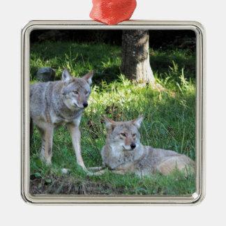 Kojote-Sammlung Quadratisches Silberfarbenes Ornament