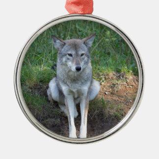 Kojote-Sammlung Rundes Silberfarbenes Ornament