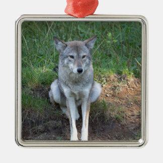 Kojote-Sammlung Silbernes Ornament