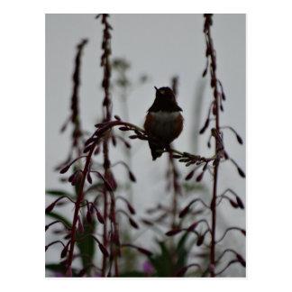 Kolibri an der Erholung Postkarte