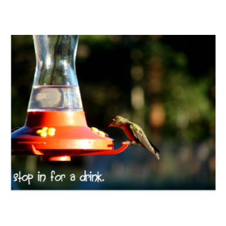 Kolibri-Getränk Postkarte