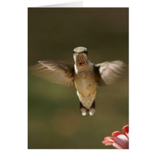 Kolibri, Gruß-Karte Grußkarte