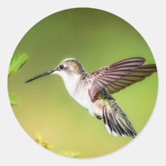 Kolibri im Flug Runder Aufkleber