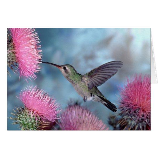 Kolibri-jeder Anlass Karte