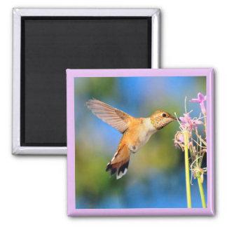 Kolibri-Magnet Quadratischer Magnet