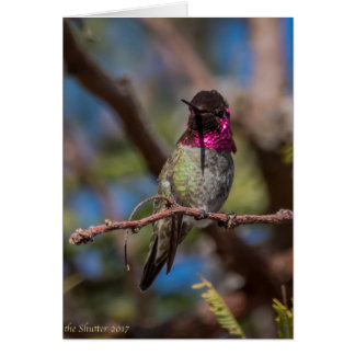 Kolibri-Schönheit Grußkarte