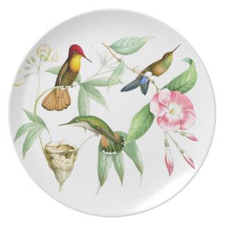 Kolibri-Vogel-Blumen-Blumentier-wild lebende Tiere Essteller