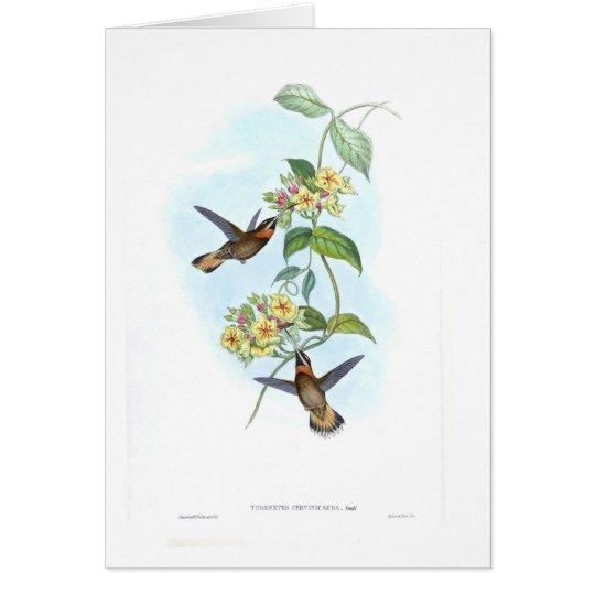 Kolibris Grußkarte
