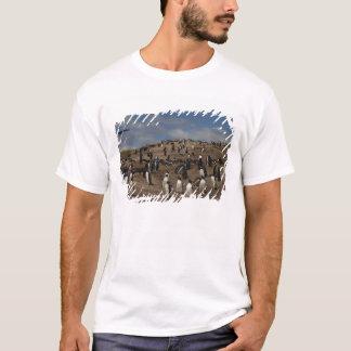 Kolonie Gentoo Pinguins (Pygoscelis Papua) auf T-Shirt