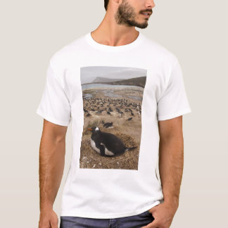 Kolonie Gentoo Pinguins (Pygoscelis Papua), West2 T-Shirt