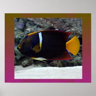 König Aglefish für der Vatertags-Geschenk-Ideen Posterdrucke