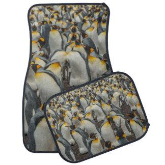 König-Pinguinkolonie, Falkland Automatte