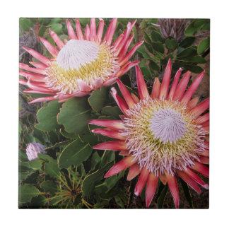 König Protea (Protea Cynaroides), Helderberg Keramikfliesen