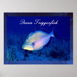 Königintriggerfish-Plakat-Druck