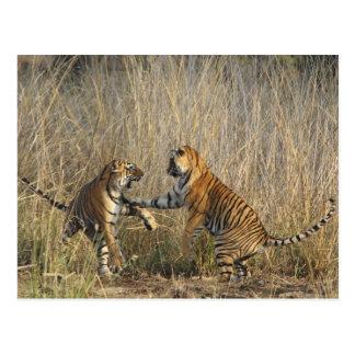 Königliche bengalische Spiel-kämpfende Tiger, Postkarte
