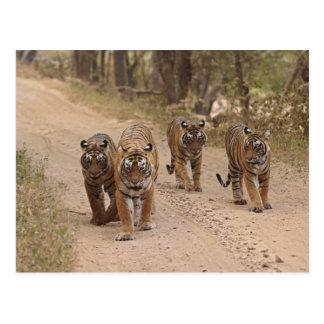 Königliche bengalische Tiger auf der Bahn, Postkarte