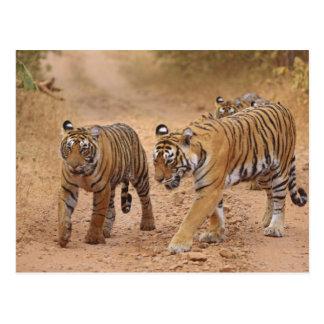 Königliche bengalische Tiger in Bewegung, Postkarte