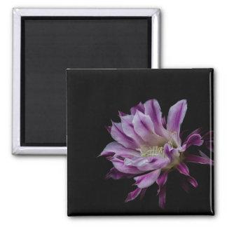 Königliche lila und weiße Blüte Quadratischer Magnet