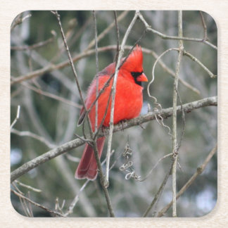 Königliche rote Kardinals-Papier-Untersetzer Rechteckiger Pappuntersetzer